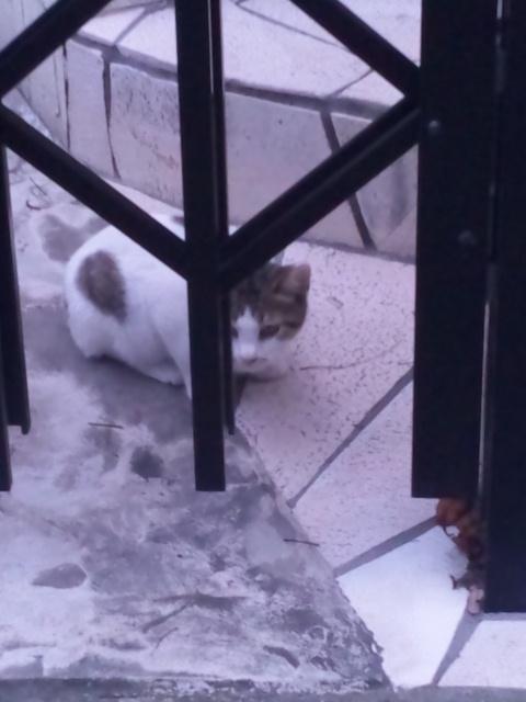 子猫、見つけたっ(^o^)v